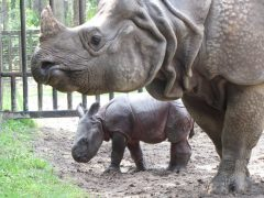 visit White Oak Conservation Center - the world's leading research, breeding and training facilities of endangered species