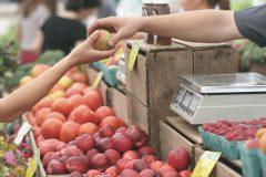 Amelia Island Farmers Market in November