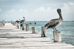 The Salty Pelican || Amelia Vacations