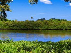 Wild Amelia Nature Festival || ERA Fernandina Beach Realty and Amelia Vacations