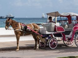 Horse drawn carriage next to the ocean || Amelia Island Vacation Rentals