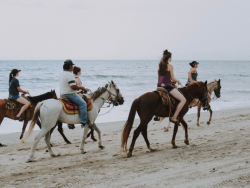Amelia Island is famous for horses, tame and wild, majestic and comfortable around people.